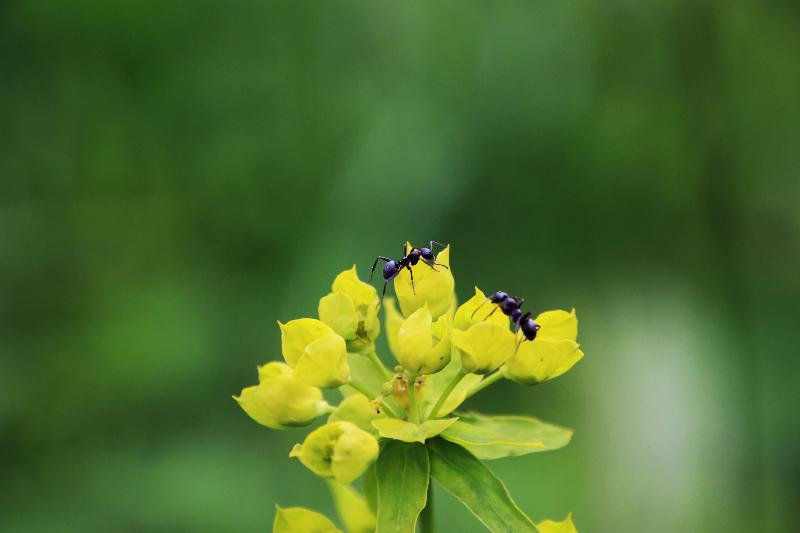 Ant Controls (nematodes)-ladybirdplantcare.co.uk