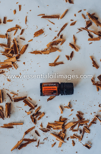 A Spotlight on Cinnamon Bark