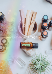 The Rainbow Essentials AUS/NZ Home Essentials Collection