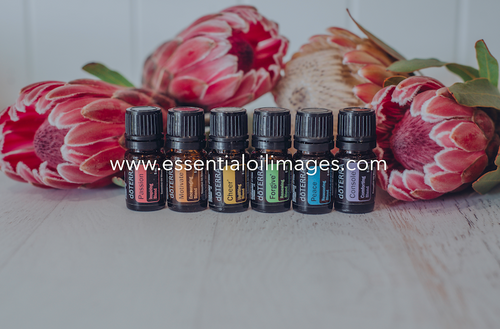 The Protea Emotional Aromatherapy Collection