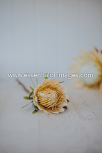 Load image into Gallery viewer, The Protea Flower Collection