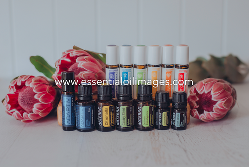 The Protea New 2019/2020 Oils Collection