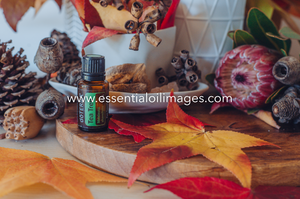 Seasonal Essentials Wellness Box Collection