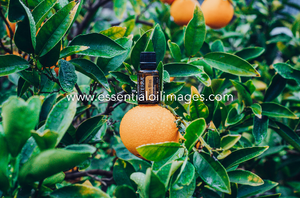 The Outdoor Citrus Collection