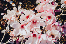Load image into Gallery viewer, The Outdoor Magnolia Collection
