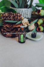 Load image into Gallery viewer, Lemon Eucalyptus - dōTERRA 2019 Together