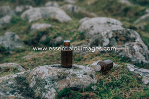 The King Arthur's Stone Unbranded Essential Oil Collection