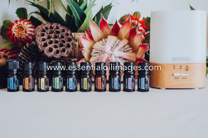 The Banksia Family Essential Collection