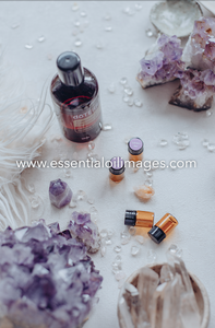 The Enlightenment Sampling Collection - A Spotlight on Lavender