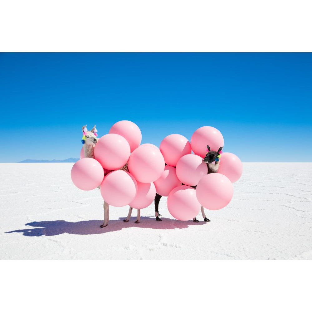 Two Llamas with Pink Balloons Print II /Gray Malin