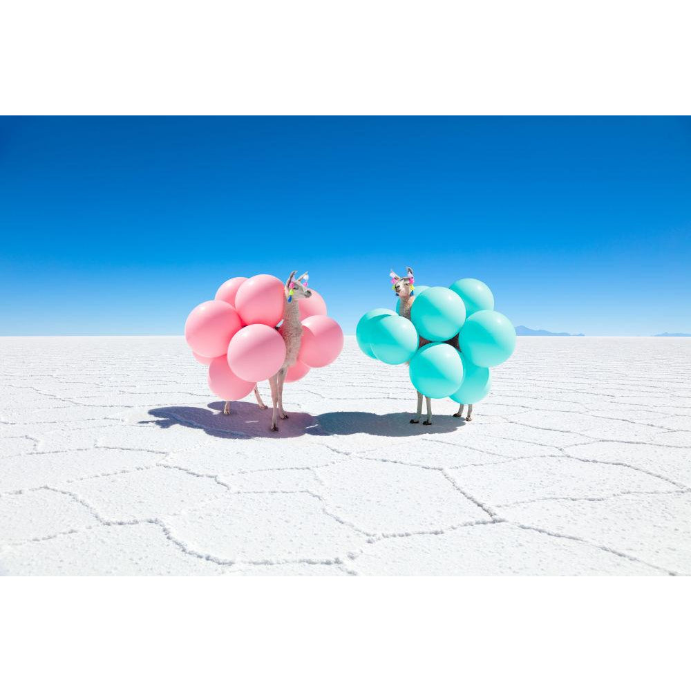 Two Llamas with Pink and Teal Balloons Print/Gray Malin