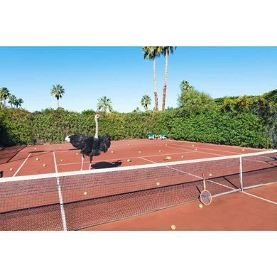 Tennis Lesson Print/Gray Malin