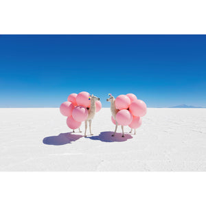 Two Llamas with Pink Balloons Print/Gray Malin