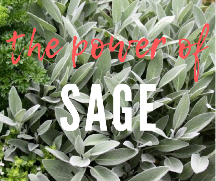 The Kitchen Salon™ : Sage- Great for your food and your hair!