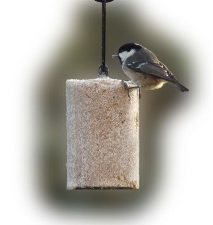 Suet Log - Gala Wildlife