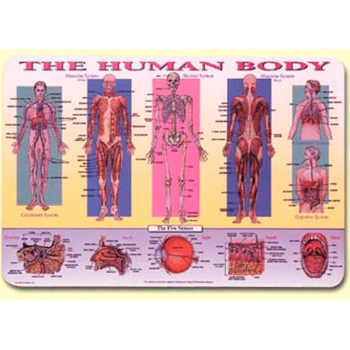 Learning Placemats | The Human Body