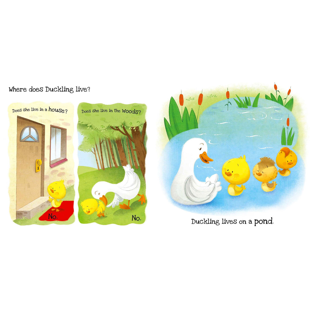 What Does Duckling Like? Touch and Feel Book