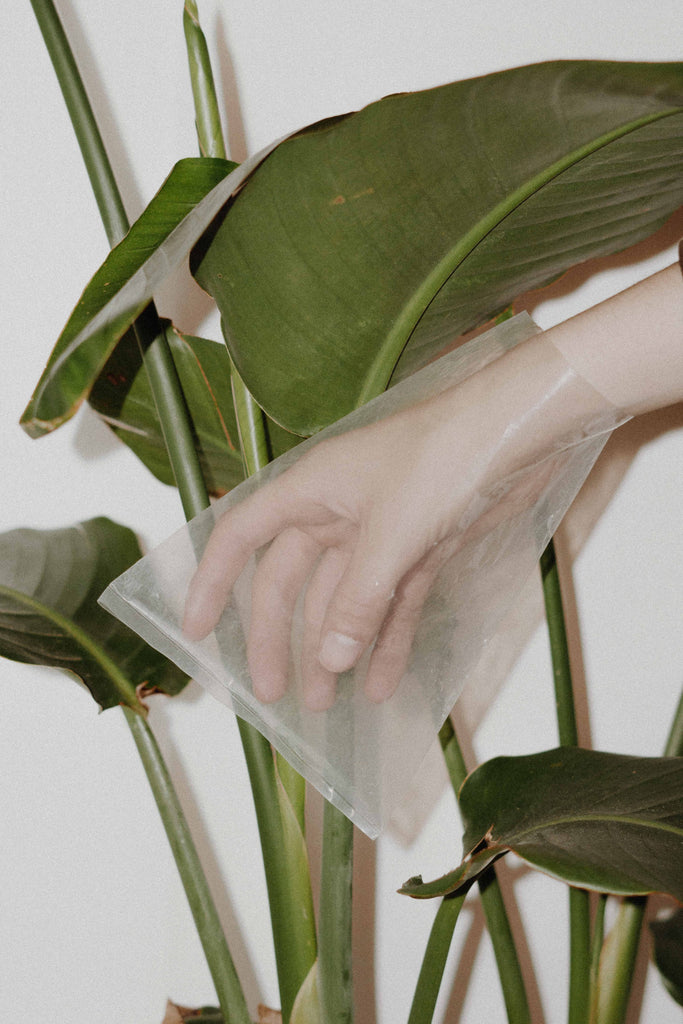 Hand in clear plastic bag posed in front of green plant