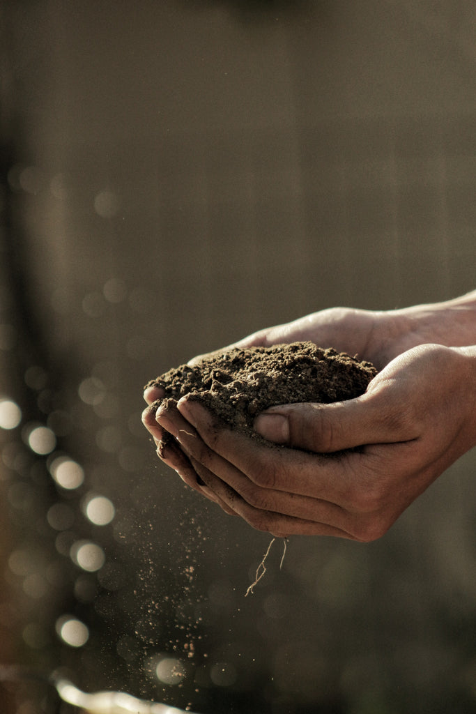 Alt image text: Hands holding compost nutrient-rich soil in nature.