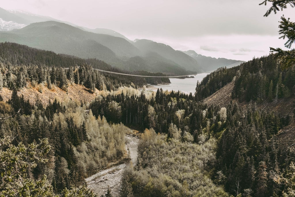 Vancouver landscape featuring luscious trees and lake while covered in fog.