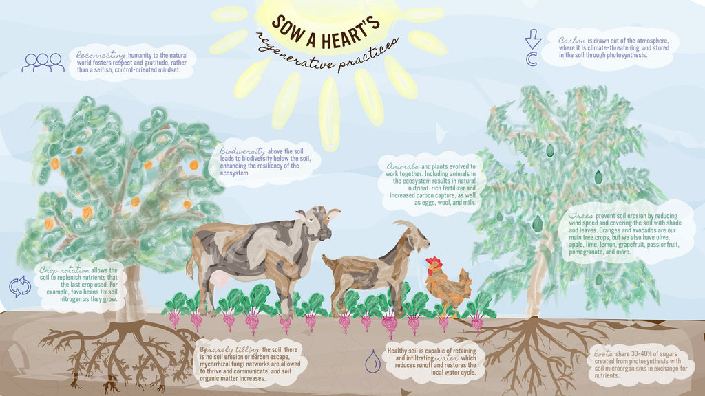 Regenerative farming practices from Sow A Heart Farm in Southern California.