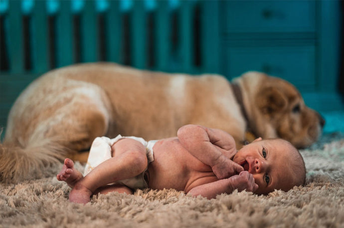 Introducing Your Dog To A Newborn