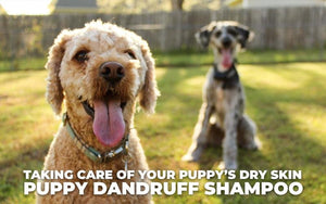Taking Care of Your Puppy's Dry Skin – Puppy Dandruff Shampoo