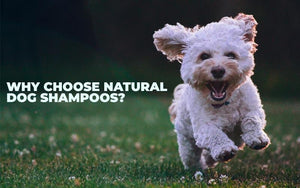 Why Choose Natural Dog Shampoos?