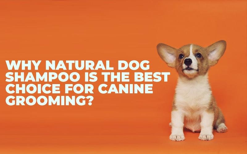 Why Natural Dog Shampoo Is The Best Choice for Canine Grooming?