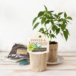 Grow your own Padrón Peppers Kit