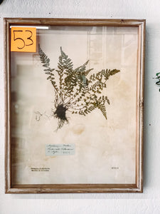53. Botanical wall art (shadow box) - Baycreek & Co