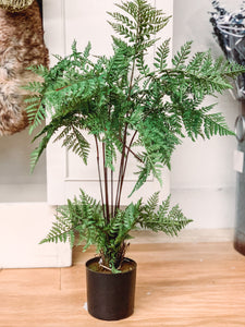 Potted monk tree (small) - Baycreek & Co