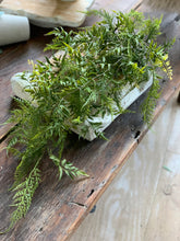 35. Fern Bush - Baycreek & Co
