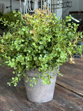36. Potted baby grass - Baycreek & Co