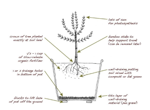 Gifted Root Potting Instructions