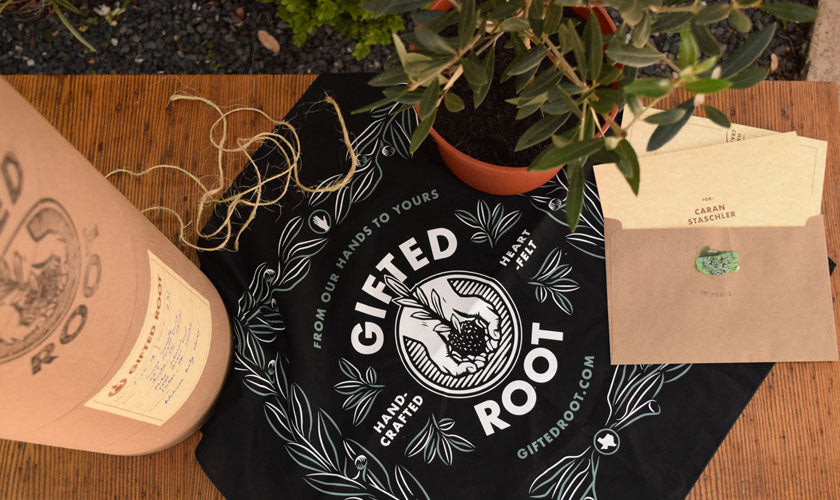 new job and office gift olive tree by gifted root