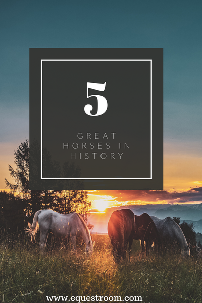 5 GREAT HORSES IN HISTORY