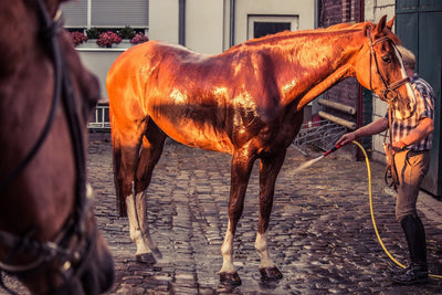 5 TIPS TO MAKE YOUR HORSE FIT