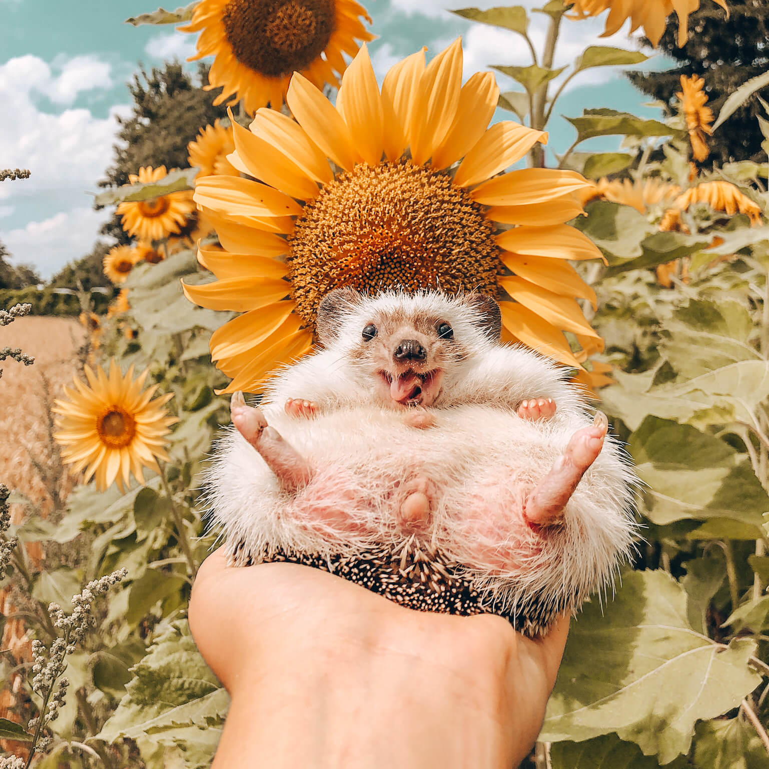 "Mr.Pokee Presets ""Sunflower Collection"""