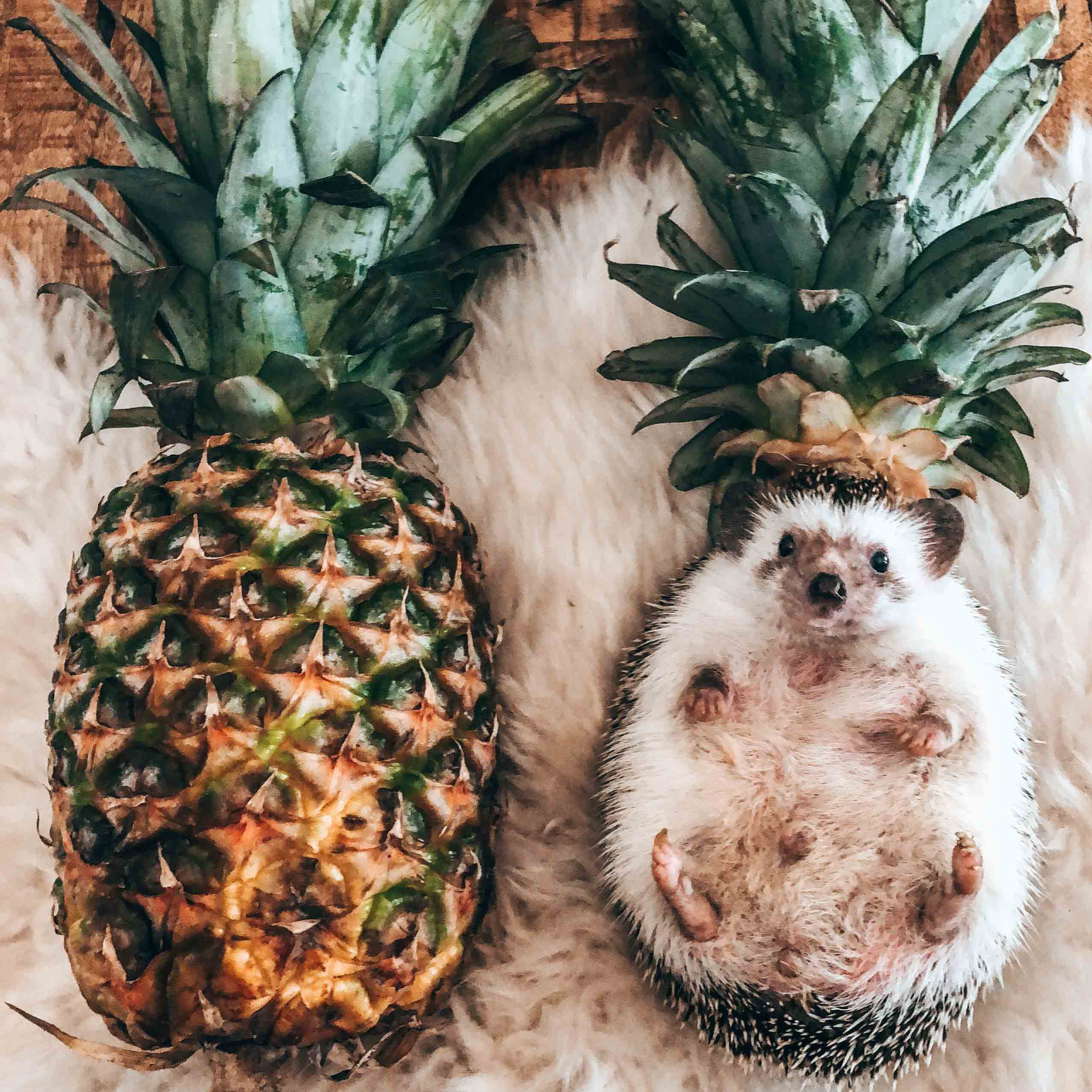 "Mr.Pokee Preset ""Be a Pineapple"" (4559573024877)"