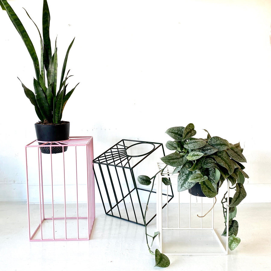 Pink Sunbeam Plant Stand | Large