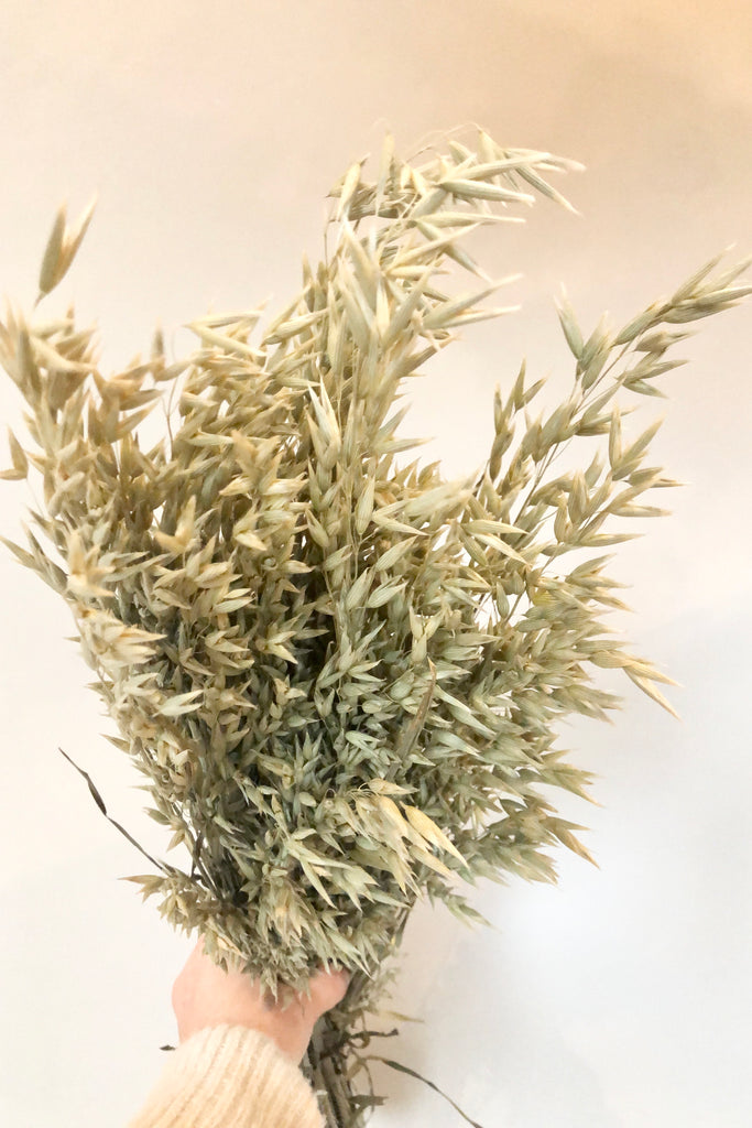 buy dried flowers online