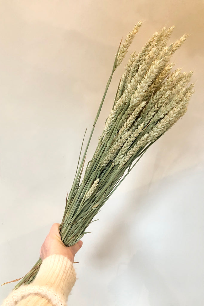 dried wheat | dried flowers ireland