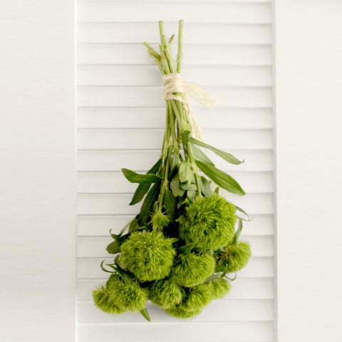Fresh Green Trick Dianthus Flowers 10 stems (free shipping) - DIY Wedding | Showers | Event | Holidays