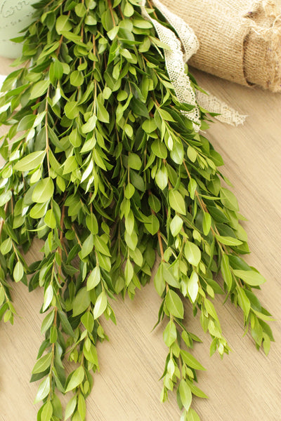 Fresh Cut Myrtle 20 stems (free shipping) - DIY Wedding | Showers | Event | Holidays