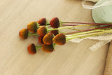 Fresh Echinacea Pods 10 stems (free shipping) - DIY Wedding | Showers | Event | Holidays