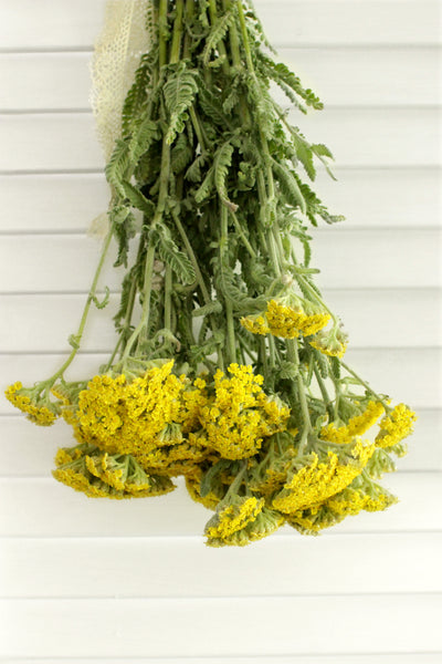 Yarrow Cottage Yellow 8-10 stems (free shipping) - DIY Wedding | Showers | Event | Holidays