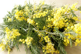 Fresh Acacia Flowers - 5-8 stems - DIY Wedding | Showers | Event | Holidays
