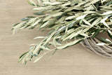 Fresh Olive Branch 8-10 stem. (free shipping) - DIY Wedding | Showers | Event | Holidays