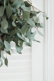 Silver Dollar Eucalyptus - DIY Wedding  | Showers  | Event  | Holidays
